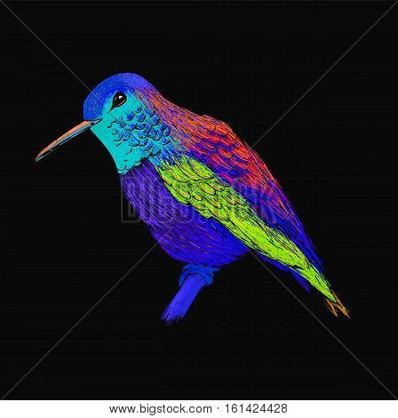 Hummingbird with colorful glossy plumage. Modern pop art style. Colourful bird, black background. Vector illustration of colibri for greeting card, invitation, print, web project. Bright and vivid colors.