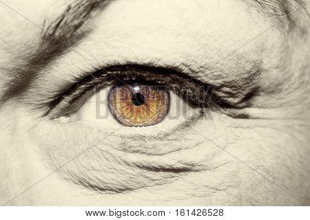 A beautiful insightful look brown woman's eyes