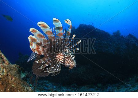 Lionfish fish on coral reef with scuba divers in background