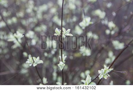 Wild little flowers full of dew in the dense fog Torcal De Antequera Malaga Spain