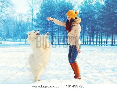 Happy Woman Owner With White Samoyed Dog Playing In Winter Park