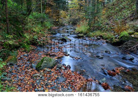 Crystal clear and cold mountain brook flowing through autumn beech and fir forest