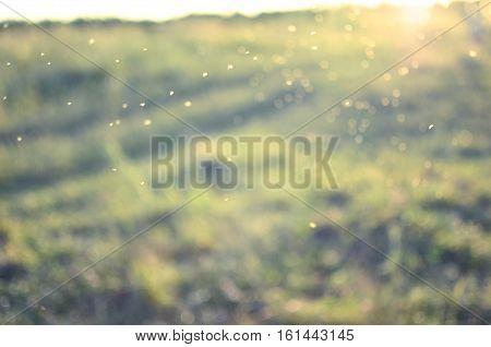 green motion background blur. Summer sun boke