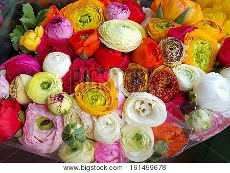 Bouquet of beautiful ranunculus colorful flowers closeup