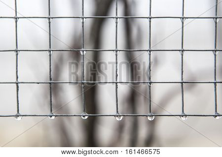Iron fence in a gray foggy day. Drops hanging from crossing lines