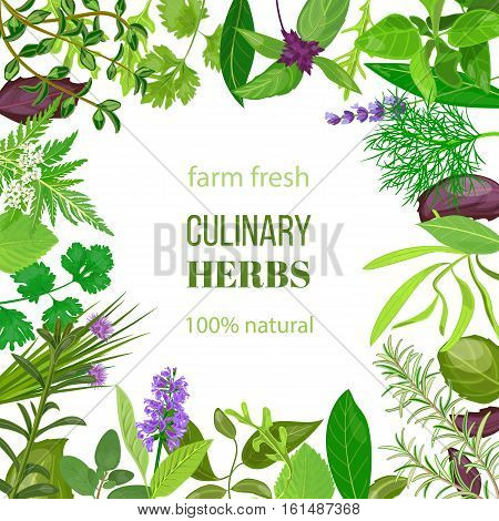 Culinary herbs ornament with text 100 natural. Vector illustration. Food design for market, menu, health care products, spa salon, ready logo, icon, banner, tag, template. Your text in frame of herbs