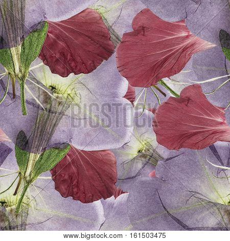 Hibiscus Petunia. Colorful texture of pressed dry flowers. Seamless pattern for continuous replicate. Beautiful photo collage.