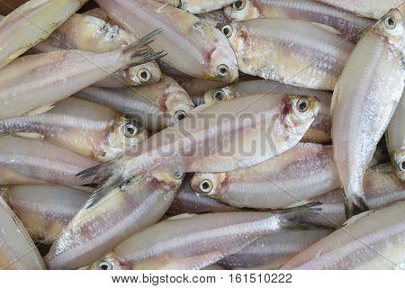 Indian anchovy or kozhuva / netholi (Stolephorus indicus)