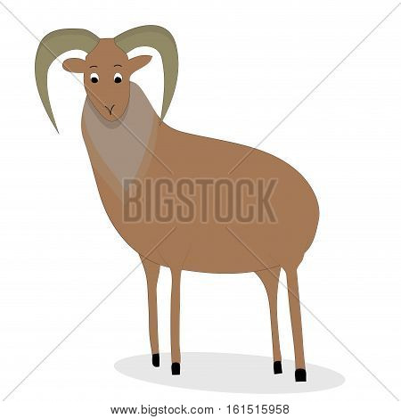 Urial animal character. Nature mammal ram with horns. Vector illustration