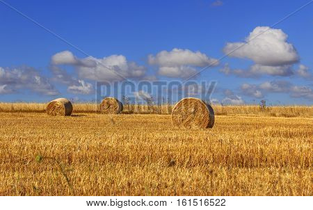 Rural landscape.Alta Murgia Nationa Park:straw bales in harvested corn fields. - (Apulia) ITALY.Summer countryside dominated by cloudscape.