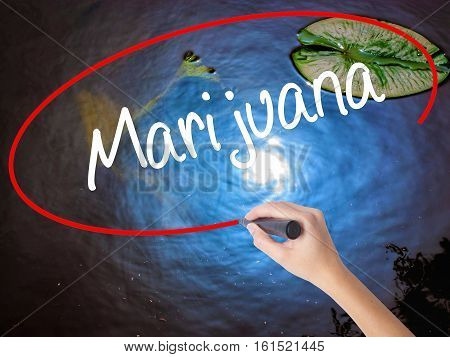 Woman Hand Writing Marijuana With Marker Over Transparent Board