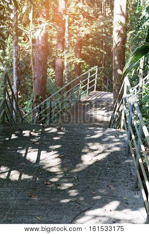 Elevated Walkway In Garden Park