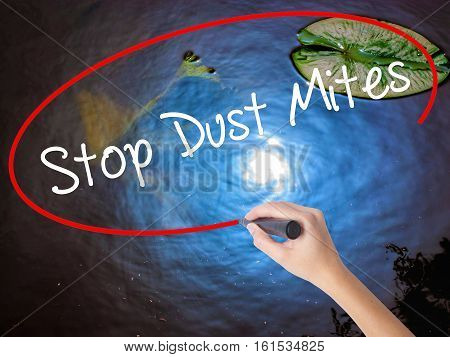 Woman Hand Writing Stop Dust Mites  With Marker Over Transparent Board.