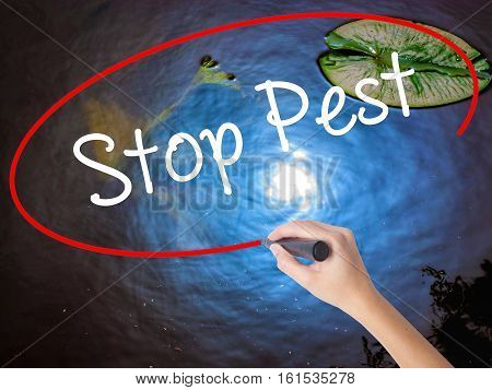 Woman Hand Writing Stop Pest With Marker Over Transparent Board