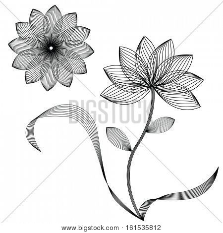 abstract flowers isolated on white