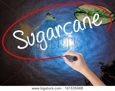 Woman Hand Writing Sugarcane  With Marker Over Transparent Board.