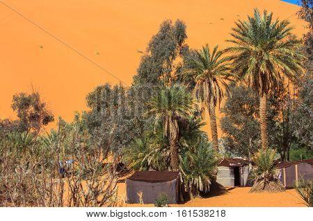 Sand Dunes And Oasis In The Sahara Desert, Merzouga, Morocco