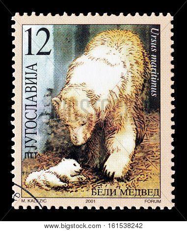 YUGOSLAVIA - CIRCA 2001 : Cancelled stamp printed by Yugoslavia, that shows Polar bears.