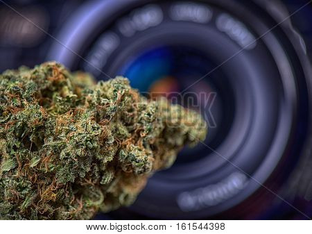 Macro detail of dried cannabis bud (love potion strain) in front of digital camera lens - marijuana photography concept