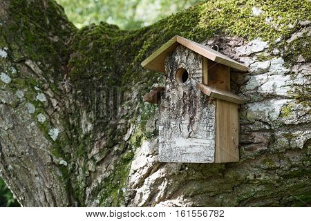 Wooden Bird House On Moss Covered Tree Branch In Woods