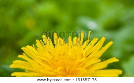 yellow flower on green leaves, summer, sun