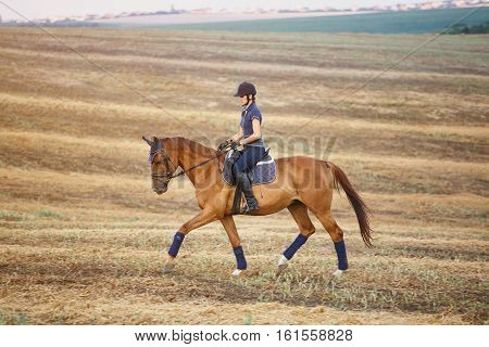 Young woman riding brown horse wearing helmet in field