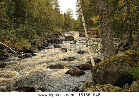 Russia,North Karelia taiga is a wild river Kurima.