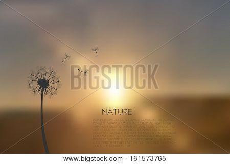 Dandelion sunrise silhouette illustration