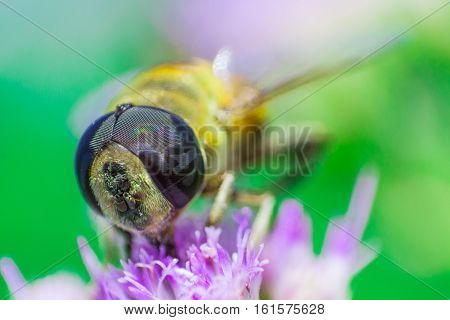 A study on insect and thier activities
