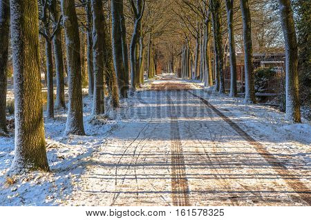 Frozen Country Road