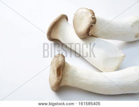 King oyster mushroom Pleurotus eryngii on white background