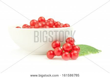 Viburnum with red berries isolated on a white background cutout