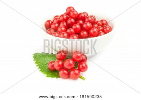 Fresh and useful viburnum isolated on a white background cutout