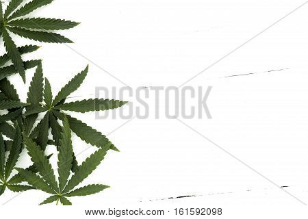 Leaves of marijuana left lying on a white background, a wooden table top