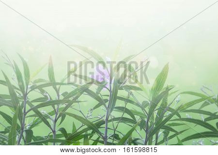 Abstract spring green background, beauty  blossom flower.