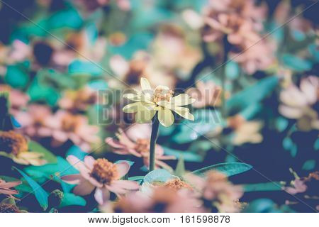 abstract floral background daisy flowers soft focus spring nature blooming meadow pastel and soft card