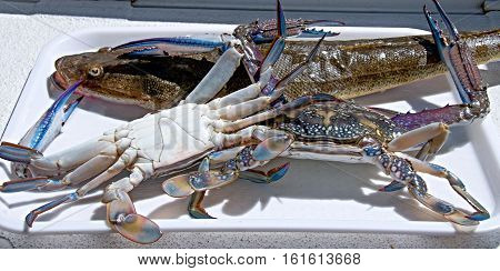 Freshly caught Blue Swimmer crabs and Flathead fish ready to cook for a seafood banquet.