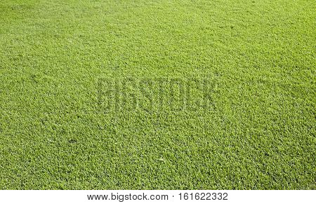 landscaped nature pack Green grass field  background