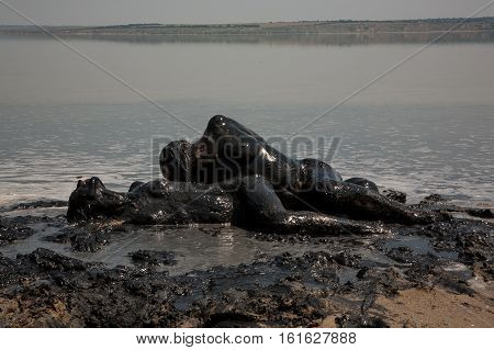The models are in the mud baths. Lake Kuyalnik attracts vacationers healing mud. Girls totally smeared with mud depict composition fashioned graces. Ukraine. Odessa. Lake Kuyalnik. 12.07.2010