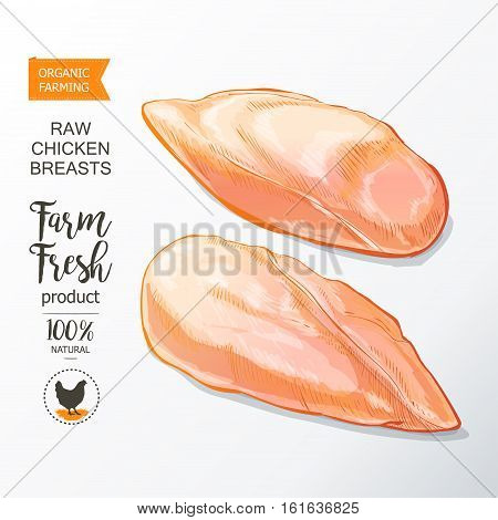 Fresh chicken breast. Top view. Isolated on a white vintage vector isolated sketch hand drown