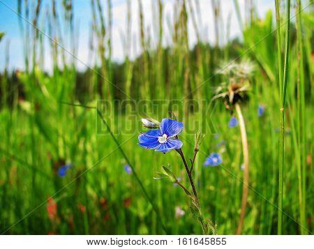One species of perennial rhizomatous plant family of Iris