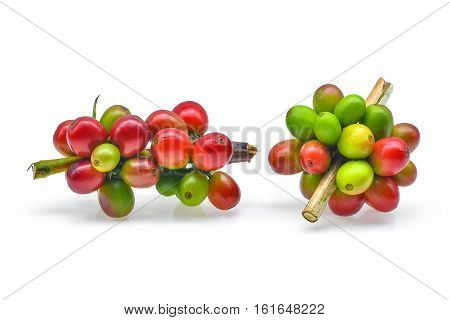 Branches of fresh coffee isolated on white backround