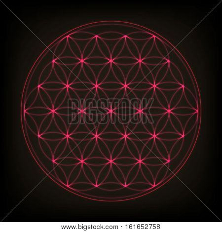 Flower of life. Sacred geometry, vector spiritual symbol. Pink neon vector illustration.