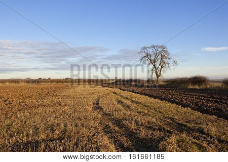 Ash Tree And Plow Soil