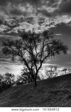 Lonely tree on a hill against cloudy sky - dramatic black and white version.