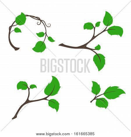 Branch tree with aspen leaves vector set for harvest natural products or eco icon template design.