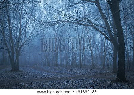 Spooky Forest Night