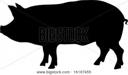 contour of pig vector illustration