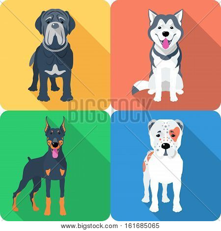 Vector set of dogs Central Asian Shepherd, Doberman, Alaskan Malamute and Mastino breed icon flat design