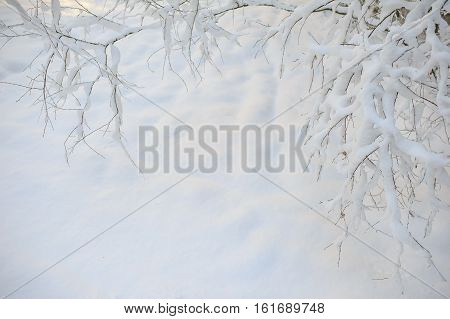 winter white tree branch covered with snow snow background in wintertime, winter framework for postcard